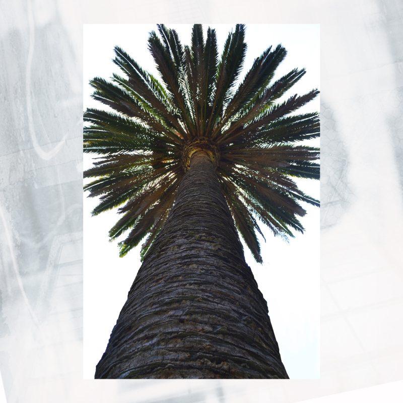 JA01-EX-AY Palm Giant 20×30