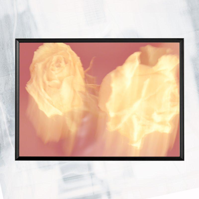 JA01-EX-BN Rose Trace Pastel_framed