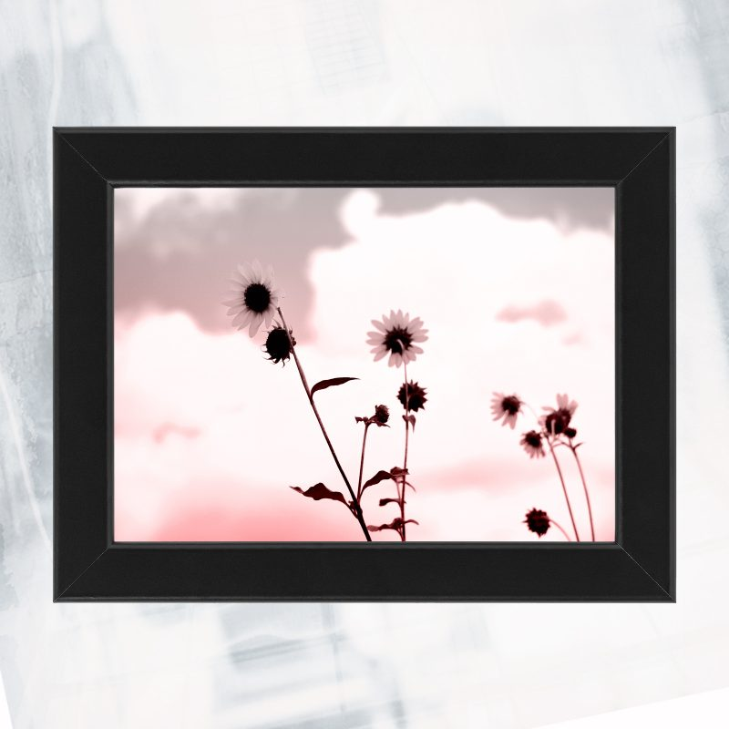 JA01-EX-CF- sunflower blue_framed