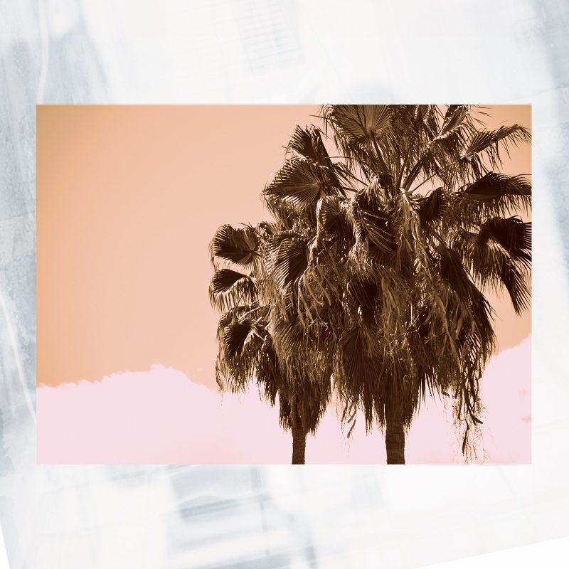 Pinkish Palms Web Shop