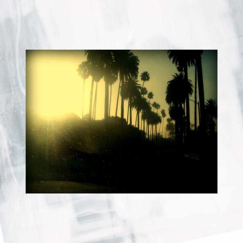 palm shadows web shop