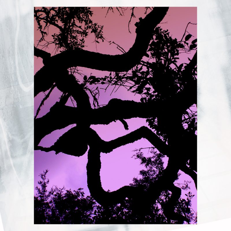 shadow_branch pink web shop